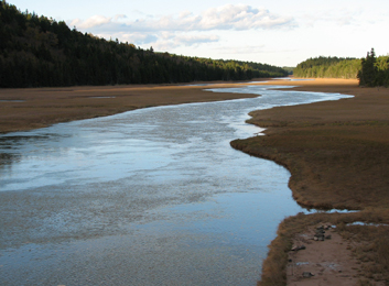 Image of a salt marsh on the Bay of Fundy