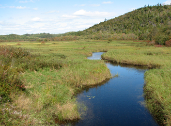 Image of a shallow marsh