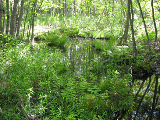 Vernal pool near York Redoubt