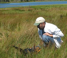 wetland assessment resources